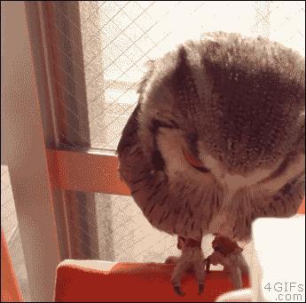 Zraszaj sowę dopóki nie napęcznieje
