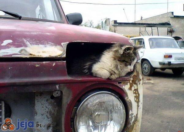 Kotek w samochodzie