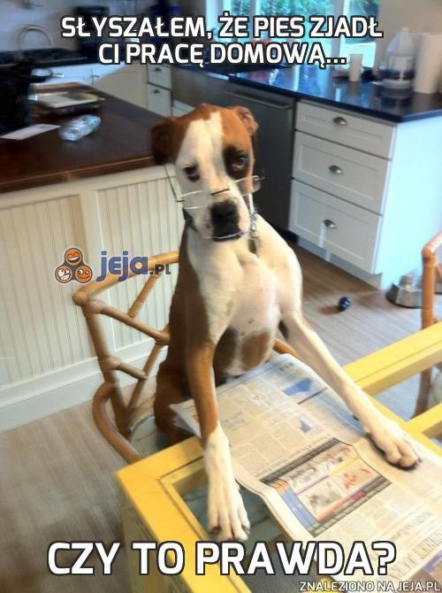 Słyszałem, że pies zjadł Ci pracę domową...