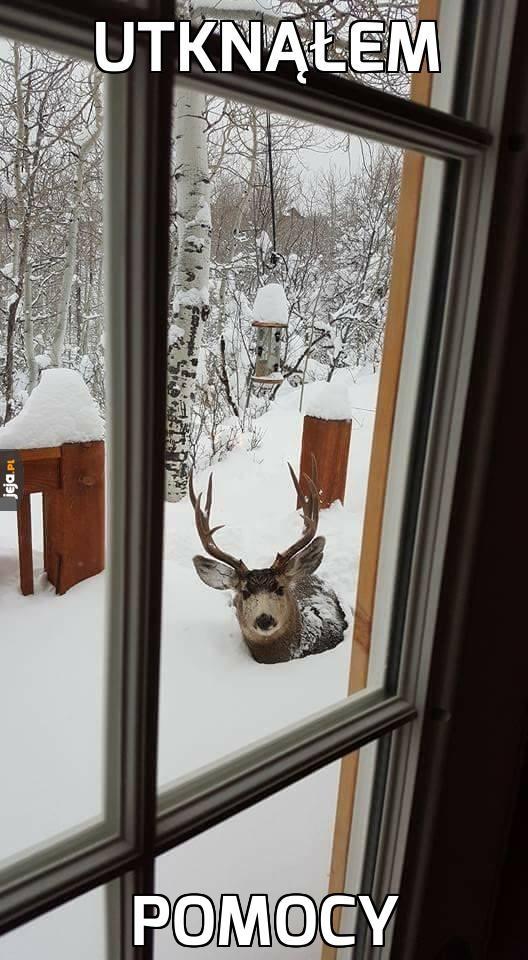 Zima zaskoczyła nawet jego