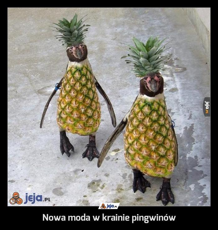 Nowa moda w krainie pingwinów