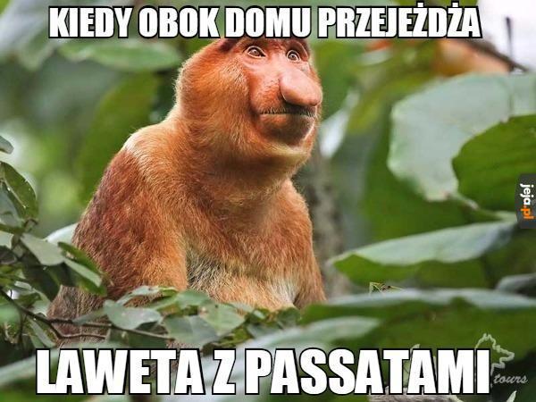 Niebiański rydwan Janusza