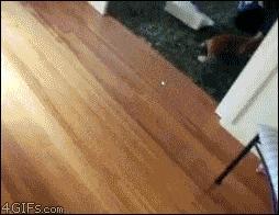 Kot + laser + ręcznik + panele + plastikowe kubki