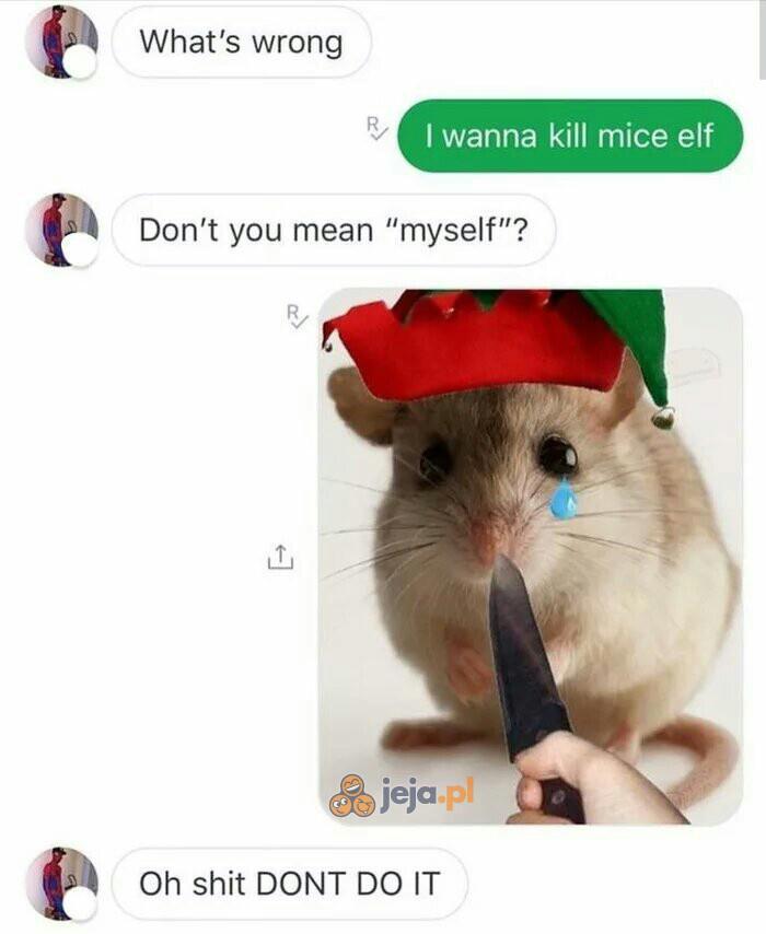 Co roku przez nieporozumienie giną setki mysich elfów