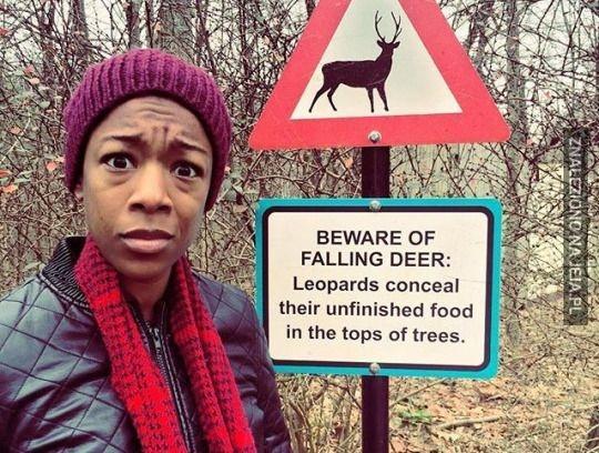 Ale żadnego ostrzeżenia o lampartach...?