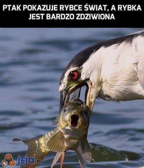 Ptak pokazuje rybce świat, a rybka jest bardzo zdziwiona