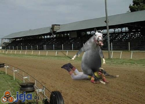 Koń na człowieku