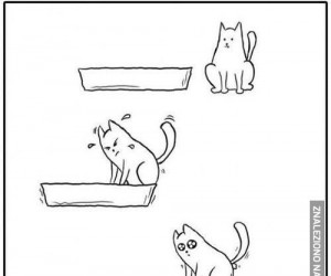 Typowy kot w akcji