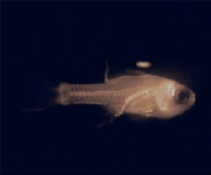 Pokemony istnieją, żyją głęboko pod wodą