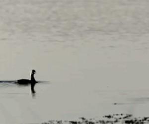 Kaczka gania po wodzie