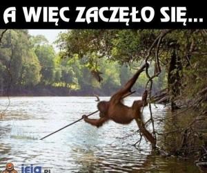 Spryt orangutana