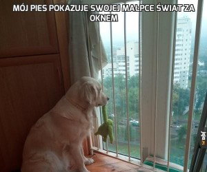 Mój pies pokazuje swojej małpce świat za oknem