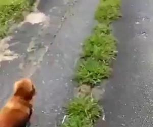 Właściciel zemdlał, ale spacer to spacer