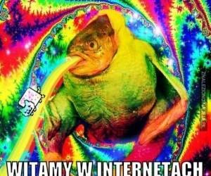 Witamy w internetach