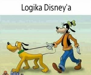 Pies prowadzi psa na smyczy