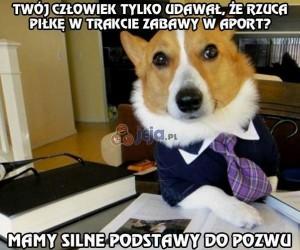 Pies prawnik