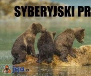 Syberyjski prom