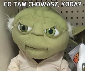 Co tam chowasz, Yoda?