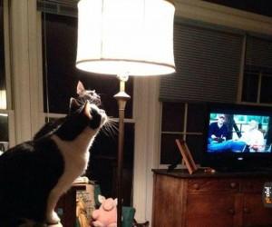 Najciekawsza lampa na świecie