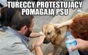 Tureccy protestujący pomagają psu