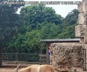 Bardzo bym prosił do zagrody z gazelami