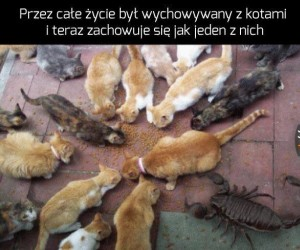 Jaki to rodzaj kota?