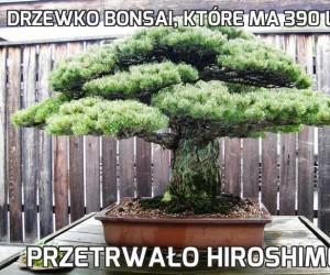 Drzewko bonsai, które ma 390 lat