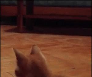 Walić to, zostaję kangurem