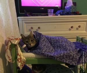 Kocie łóżko piętrowe