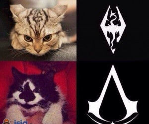 Te koty nie narodziły się bez celu