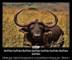 Buffalo buffalo Buffalo buffalo buffalo buffalo Buffalo buffalo
