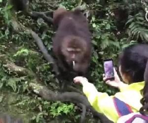 Zabieram do dżungli