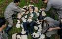 Kiedy pandki Cię pokochają