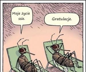 Życie komara