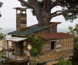 Domek na drzewie... albo w zasadzie naokoło