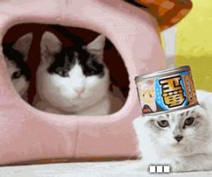Mój nowy ulubiony gif z kotem