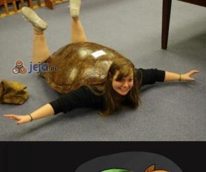 Żółwica z przypadku