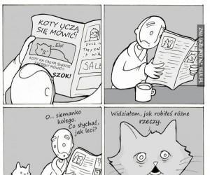 Szanuj swojego kota, bo przyjdzie taki czas...