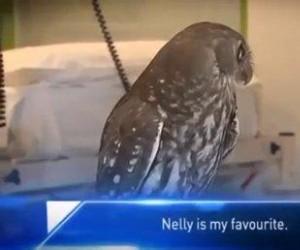 Pan ptak widział straszne rzeczy...
