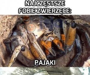 Fobie zwierzęce