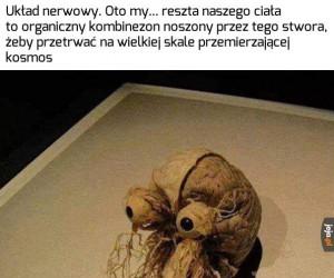 Przerażające, ale prawdziwe