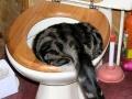 Koci nurek