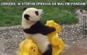 Ośrodek, w którym opiekują się małymi pandami