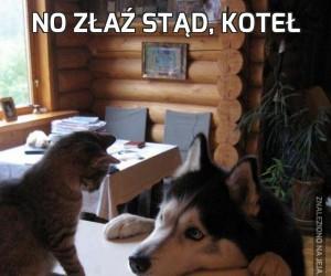 No złaź stąd, koteł