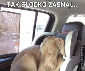 Tak słodko zasnął...