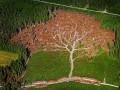 Drzewo pośród drzew