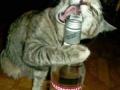 Kot pije z gwinta