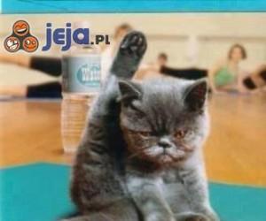 Koci fitness