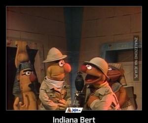 Indiana Bert