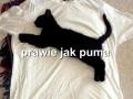Prawie jak Puma